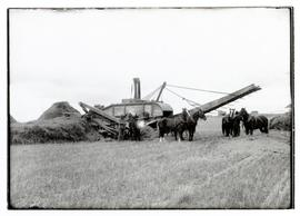 Harvesting with a threshing machine, men and teams of horses