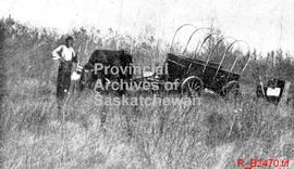 A Barr colonist's ox team and wagon stuck in a slough