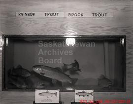 [Various Fish in Fisheries Exhibit and Lake Trout in Natural Habitat]