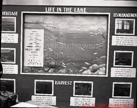 """Life In The Lake"" display case"