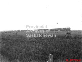A wheat train (Canadian Pacific Railway) crossing the prairies
