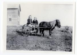 A pony pulling a two-wheeled cart which was used by two girls for going to school