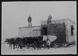 Building on sleds being moved in the Tyvan district by six oxen