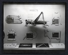 "A display case of ""Insects at Regina museum"