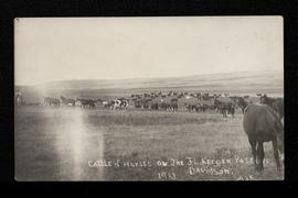 Cattle and horses in pasture at Davidson