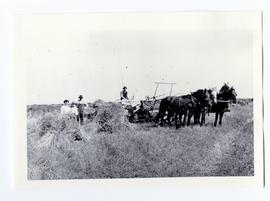 Mr. and Mrs. A.R. Rhodes and their son, Leslie, of the Zelma area with binder pulled by a team of...