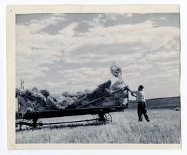 Man in a field loading sheaves into a rack