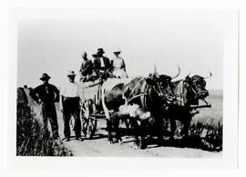 A group of settlers in and beside a wagon pulled by two oxen