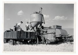 Emptying the grain from the hopper of a Case combine into a truck