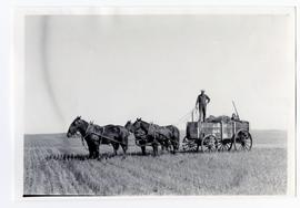 Horse-drawn wagon filed with straw or sheaves