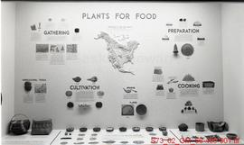 """Plants for Food"" - Museum of Natural History"