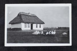 Flock of geese outside a thatched-roof house (Ukrainian)