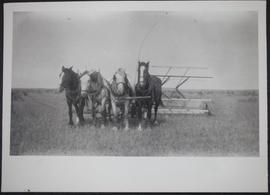 Binder drawn by four horses in Regina district