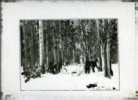 Cutting timber north of Prince Albert